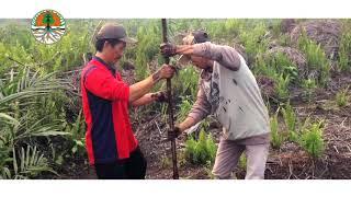 Pemulihan Ekosistem Gambut di Indonesia